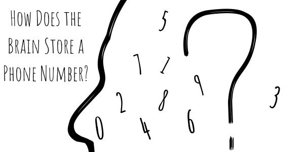 brain-store-phone-number